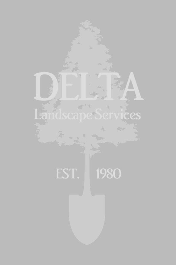 Paul - Delta Landscape President